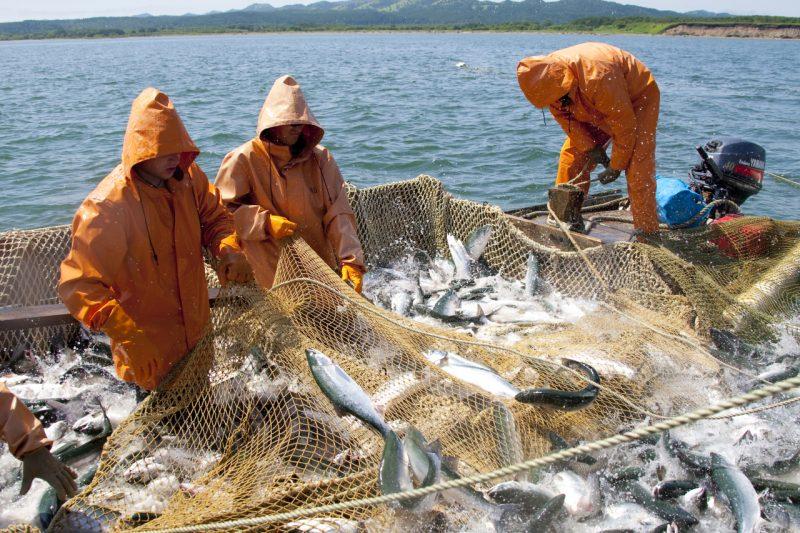 ФАС предложила пересмотреть принципы распределения квот на вылов крабов и рыбы