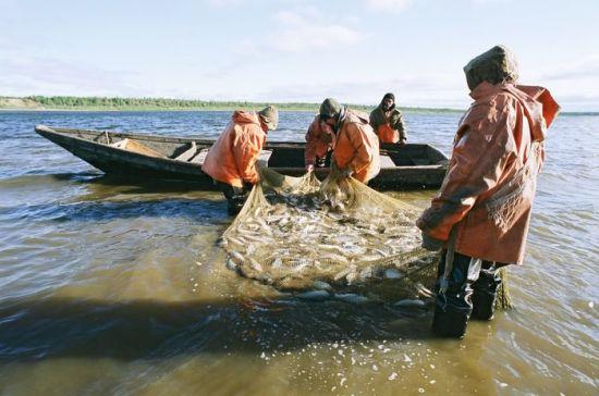 У Росрыболовства есть все предпосылки для увеличения квот на вылов рыбы в Норило-Пясинском бассейне
