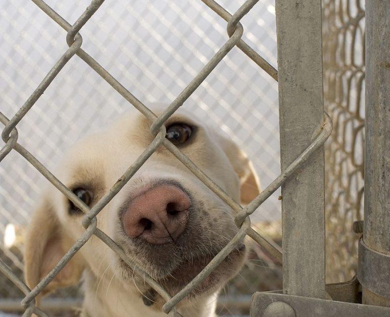 Сопредседатель партии «Зелёные» Сергей Шахматов прокомментировал инициативу поощрения забирающих животных из приютов